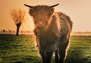 Jeune Highlander sur natascha verbij