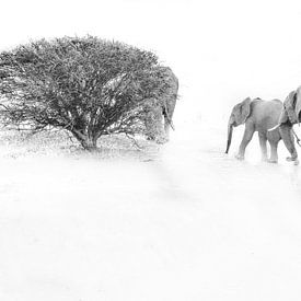 Elefantenbaby mit Mutter von Robert Styppa