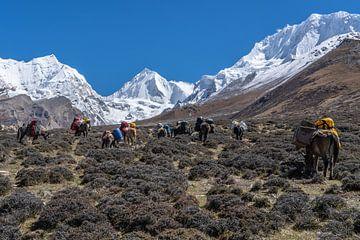 Kudde muildieren in de Himalaya in Nepal van Tessa Louwerens
