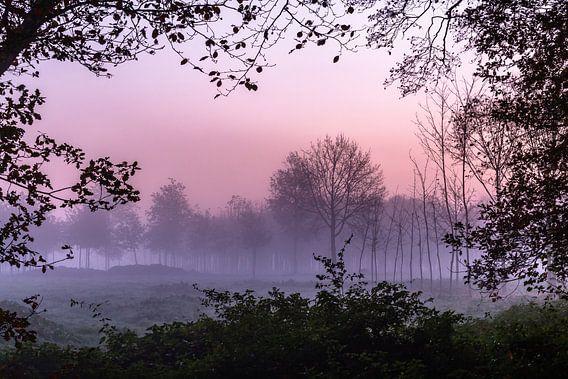 Misty Forest Window