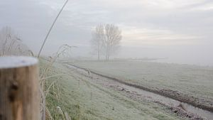 Brouillard sur la digue en coquillage