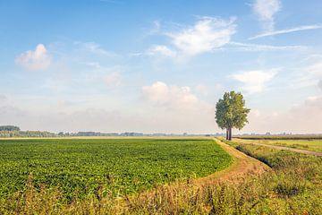 Malerische niederländische Landschaft in Noord-Brabant von Ruud Morijn