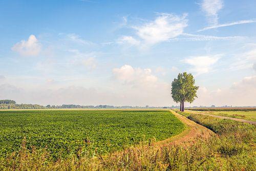 Malerische niederländische Landschaft in Noord-Brabant