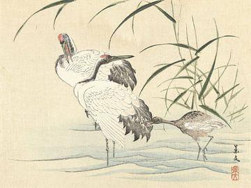 Zwei Kraniche mit Jungen von Matsumura Keibun - 1892