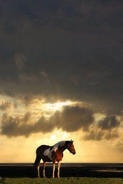 Lonely horse sur marjan woudstra