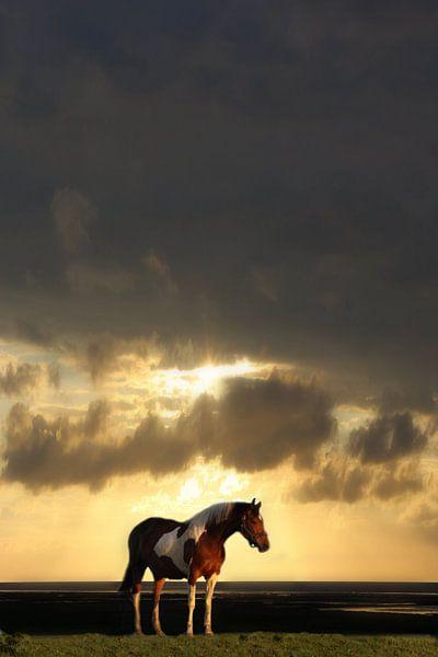 Lonely horse van marjan woudstra