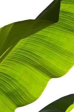 Green waves van Leon van Voornveld