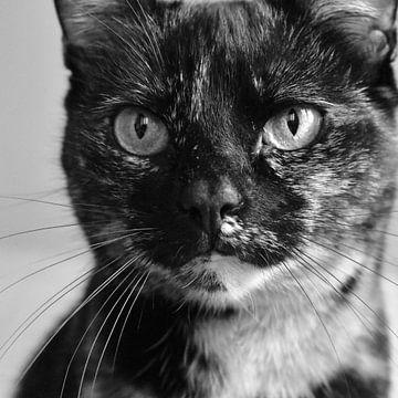 Die Katze, die Sie wirklich ansieht. von TimJonkerphotography