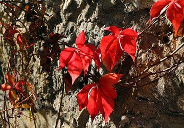 Herbstblätter sur Rosi Lorz