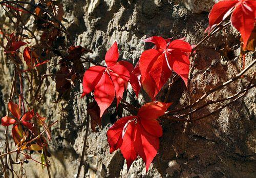 Herbstblätter van