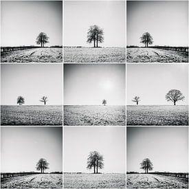 Collage d'arbres dans les champs sur Rob van der Pijll