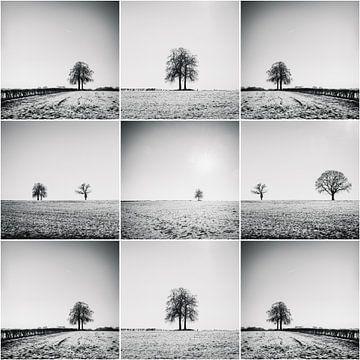 Bäume in der Feld-Collage von Rob van der Pijll