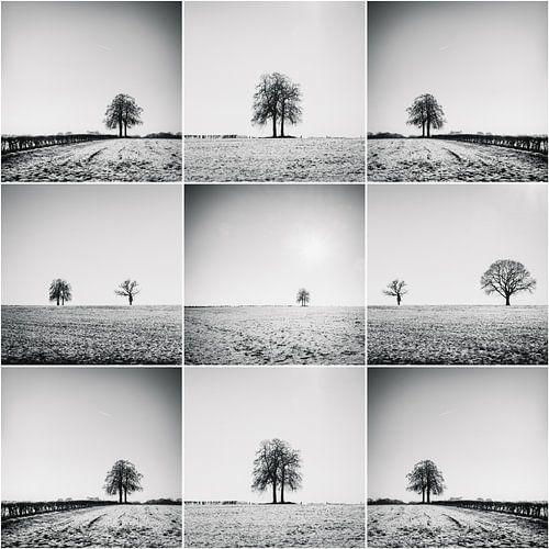Collage d'arbres dans les champs
