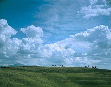 Eenzame bomen, Toscane van Rene van der Meer