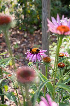 Bunte lila Blumen mit Bienen von Elien Voets