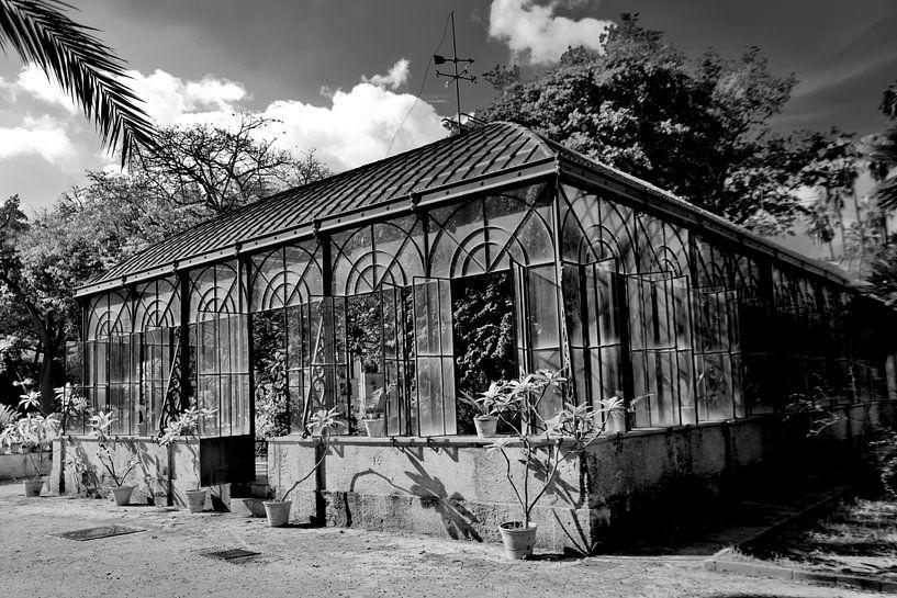 Orto botanico, Palermo von Sven Zoeteman