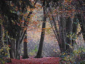 Dansende bomen van Sran Vld Fotografie