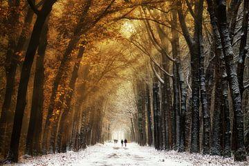 Autumn2Winter von Martin Podt