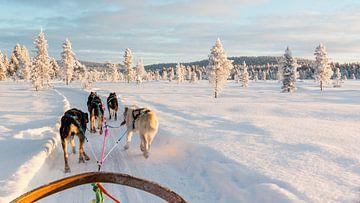 Op de slee door de sneeuw van Rene Wolf