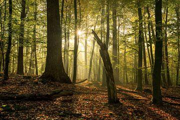 Der abgestumpfte Baum von Joris Pannemans - Loris Photography