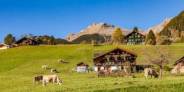 Kühe auf der Weide in Grindelwald von Werner Dieterich