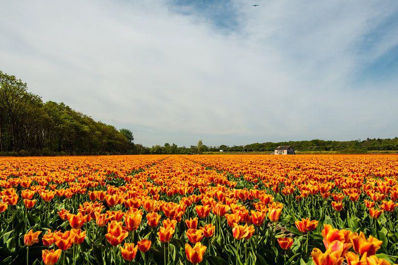 Tulpenveld in Holland van Brian Morgan