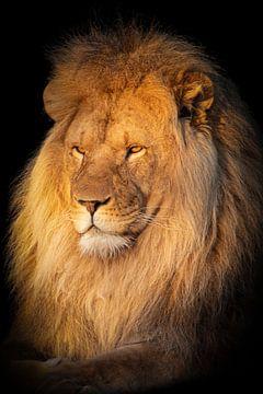 Leeuw in het zonnetje van Marjolein van Middelkoop