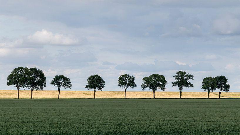 Bomenrij landschap. van Anjo ten Kate