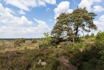 Sallandse heuvelrug panorama met boom van Jaap Mulder
