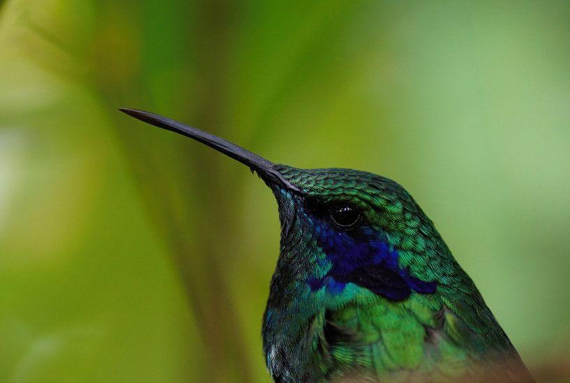 Kolibrie van Michael Rust