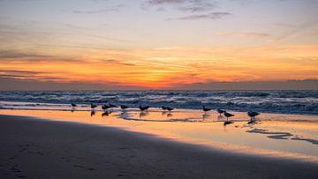 Meeuwen met zonsondergang von Richard Steenvoorden