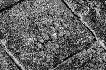 Fußabdrücke Katze von Stijn Cleynhens
