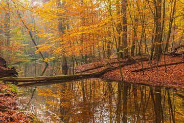 Herbst auf der Veluwe am Leuvenumbach von Christiaan de Graaf