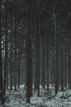 Sneeuw in het bos van BY MEAGAN