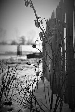 Winterbes van Hannelore