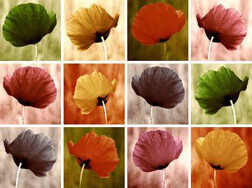 Mohnblumen von Violetta Honkisz