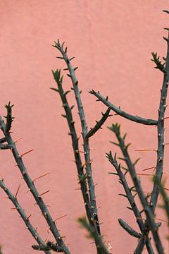 Exotischer Kaktus hebt sich von rosa Wand ab von HappyTravelSpots