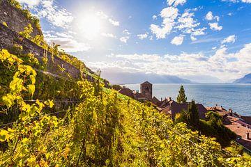 St. Saphorin im Lavaux  am Genfer See von Werner Dieterich