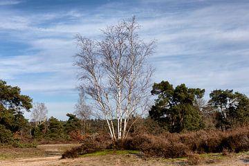 Beeld van de heide bij het Otterlose Bos en het Otterlose Zand. van Rick van der Poorten