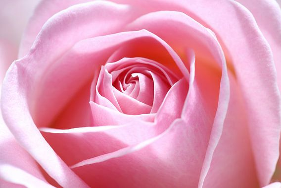 Pink beauty van LHJB Photography