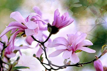 Roze ster magnolia van christine b-b müller