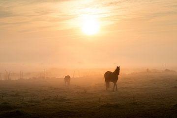 Paarden in het weiland bij sfeervolle zonsopkomst van