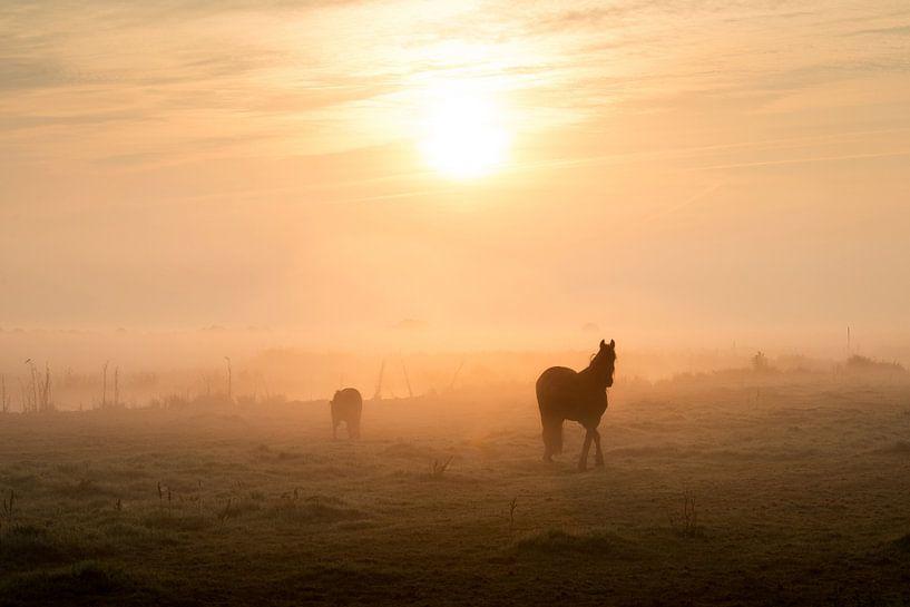 Paarden in het weiland bij sfeervolle zonsopkomst van Keesnan Dogger Fotografie