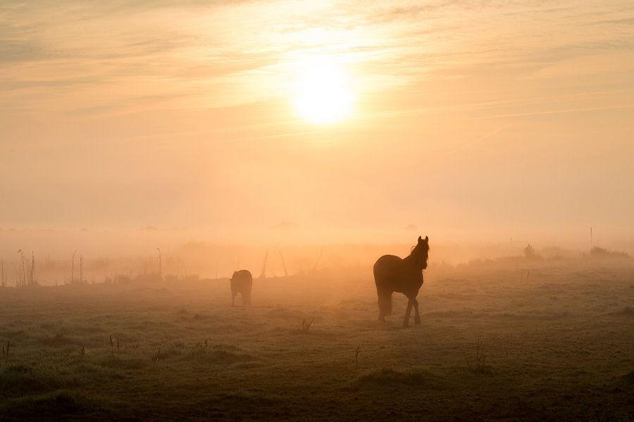 Paarden in het weiland bij sfeervolle zonsopkomst