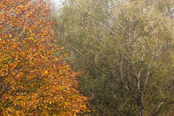 Herfstbomen naast elkaar van Elroy Spelbos