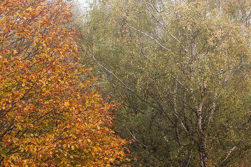 Herfstbomen naast elkaar van