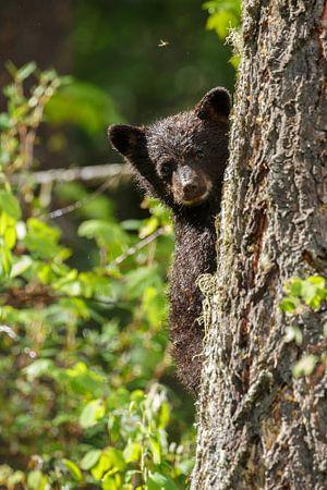 Zwarte beer jong