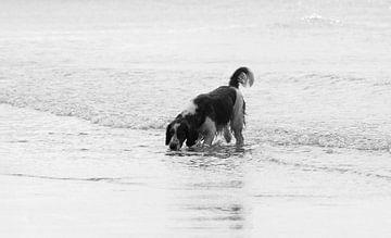 Hund am Strand von Zoutelande von MSP Canvas
