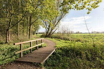 Wandelpad met bruggetje  in Alblasserbos von Beeldbank Alblasserwaard
