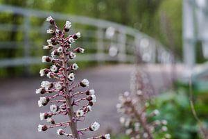 Bloemen bij de brug van David Muntinga
